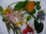 leaves and flowers collected in May