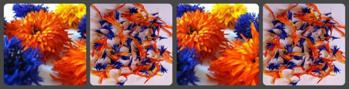 orange and blue dried flowers