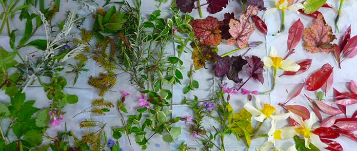 a collection of flowers and leaves